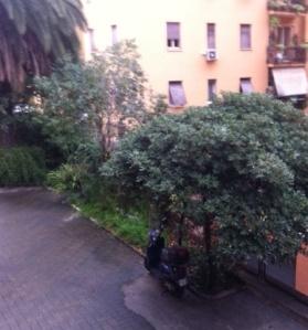 l'albero di Tota